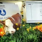 """""""Bei uns gibt es auch glückliche Kühe..."""" - Einklang HiFi Berlin"""